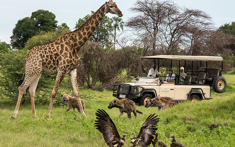 Up to 25% Off on Botswana Safari Tours & Travel Packages